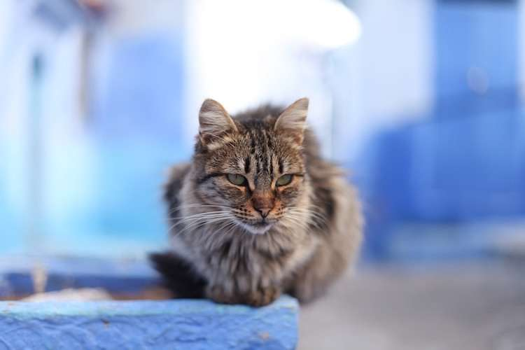 Adorable Moroccan cat
