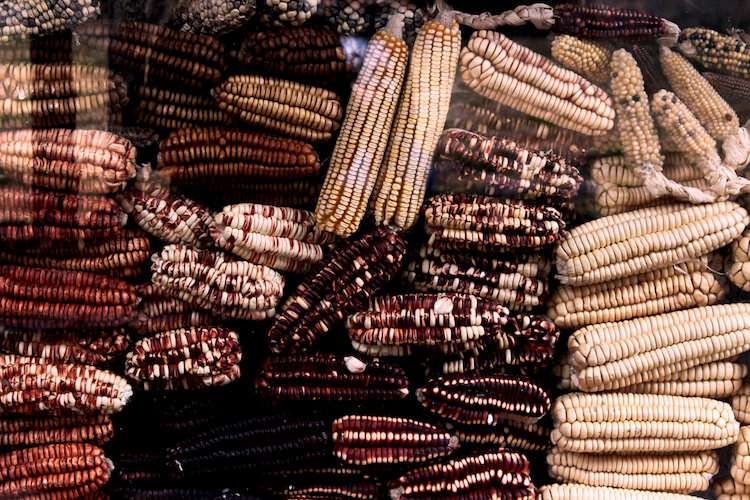 Peru corn production