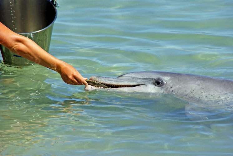 Peru pink dolphins