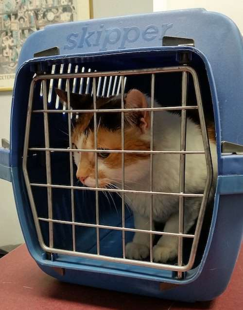 cat crate travel