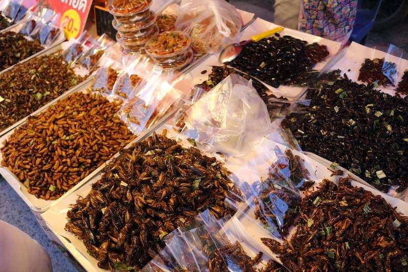 fried insects chiang mai thailand