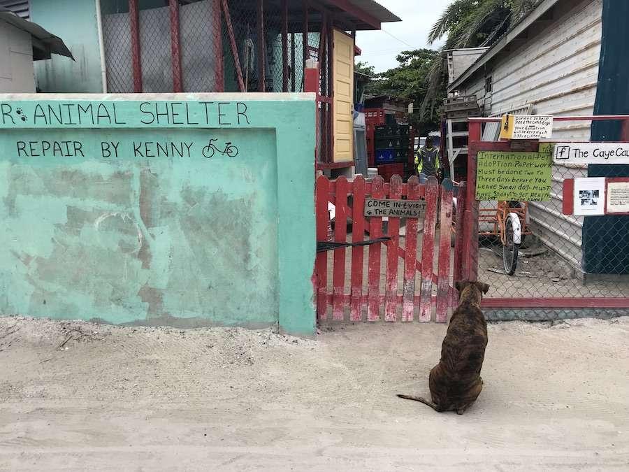 Kennys animal shelter caye caulker