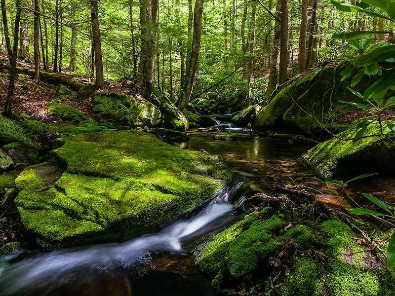 Beautiful stream in the Catskills