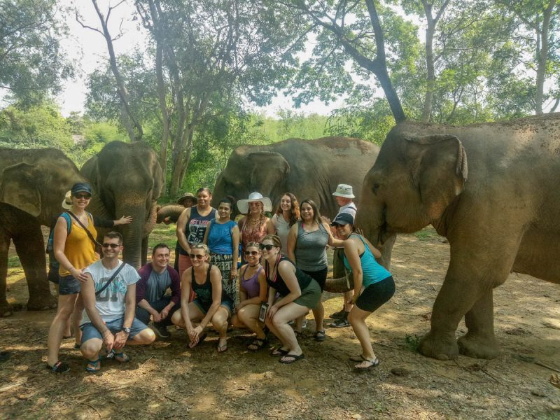 Group shot in the elephant nature park in Chiang Mai Thailand