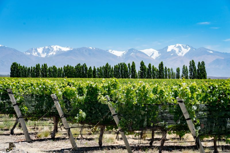 Gorgeous Andes mountains behind a vineyard in Mendoza