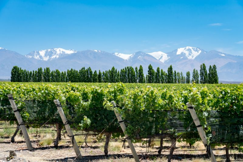 Andes mountains behind a sea of vineyard