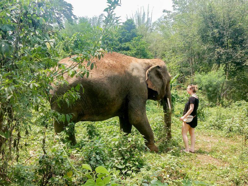 Silent conversation with our elephant friend Thailand