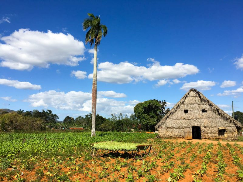 Tobacco hut in Vinales Cuba